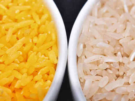 In A Grain Of Golden Rice, A World Of Controversy Over GMO Foods | Geography Education | Scoop.it