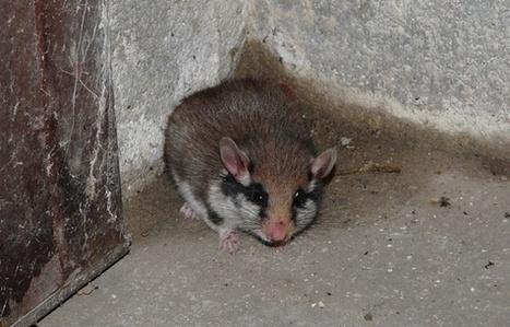 Bretagne: Une espèce animale sur cinq menacée de disparition | animals rights and protection | Scoop.it