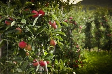 It's Not a Fairytale: Seattle to Build Nation's First Food Forest | Peer2Politics | Scoop.it