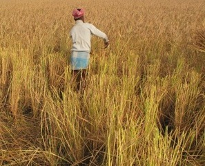 How to Fight Food Insecurity, Even In a Changing Climate - Scientific American (blog) | Vertical Farm - Food Factory | Scoop.it