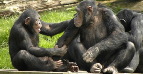 Scientists Create 'Dictionary' of Chimp Gestures to Decode Secret Meanings | Visual Culture and Communication | Scoop.it