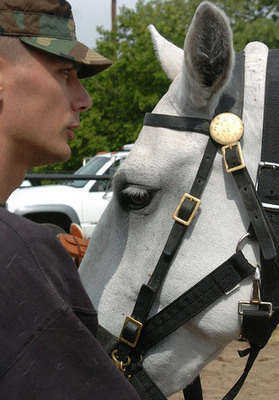 Military vets to benefit from equine therapy research - Focus - Horsetalk.co.nz   Equine Assisted Learning and Psychotherapy   Scoop.it