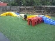 Supervised Dog Daycare Service in Cincinnati | petresorts | Scoop.it