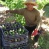 Agriculture et Alimentation méditerranéenne durable