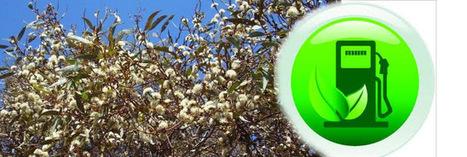 Biocarburants : l'avenir de la production énergétique ?   agrophil   Scoop.it