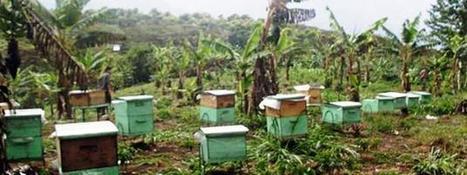 Bee sting to scare away straying elephants | GolfingforElephants | Scoop.it
