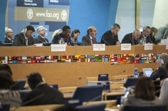 Contribution of forests to food security and nutrition needs more ... | Food Security and Nutrition | Scoop.it