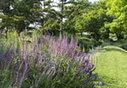 Le jardin de l'école Du Breuil s'ouvre au public | pour mon jardin | Scoop.it