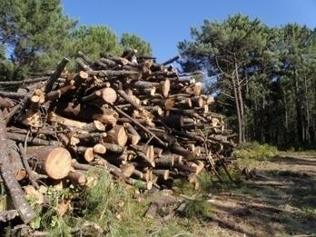 Biomasa - Galicia destina diez millones a ayudas forestales que incluyen a la bioenergía - Energías Renovables, el periodismo de las energías limpias. | Biomasa, tecnología sostenible para un futuro duradero! | Scoop.it