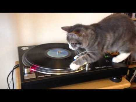 DJ Cat | Funny and Viral Photos | Scoop.it