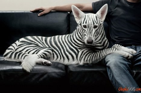 Unusual Dog Breeds - high-quality photos | Dog Lovers | Scoop.it