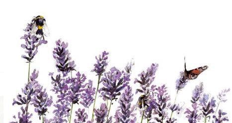 Agir pour les abeilles   Nature, climat, environement et santé   Scoop.it