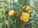 Preter un jardin | créer un  potager | partager son jardin | alternatives agricoles | Scoop.it