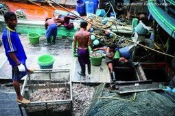 The Threat of Pirate Fishing to the World's Fisheries - The Epoch Times | Sustainable Seafood | Scoop.it