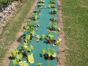 Créer un petit #potager dans le #jardin | Best of coin des bricoleurs | Scoop.it