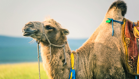 Influenza A jumped from horse to camel - Futurity: Research News | Influenza | Scoop.it