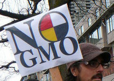USDA SHOWS IT TRUE HAND: GMO-Friendly Report leaves burden of GMO contamination with 'victim;' | YOUR FOOD, YOUR ENVIRONMENT, YOUR HEALTH: #Biotech #GMOs #Pesticides #Chemicals #FactoryFarms #CAFOs #BigFood | Scoop.it