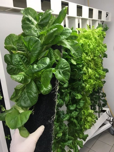 Modular Farms Newsletter #4 | Vertical Farm - Food Factory | Scoop.it