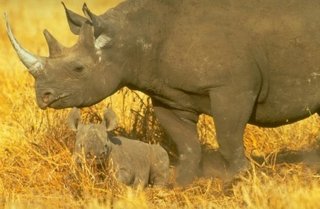Map exposes the scale and nature of rhino horn trade – EIA International   GarryRogers Biosphere News   Scoop.it