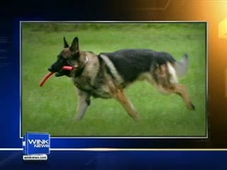 Florida deputies says suspect beat one of their K9s (VIDEO) | The Billy Pulpit | Scoop.it