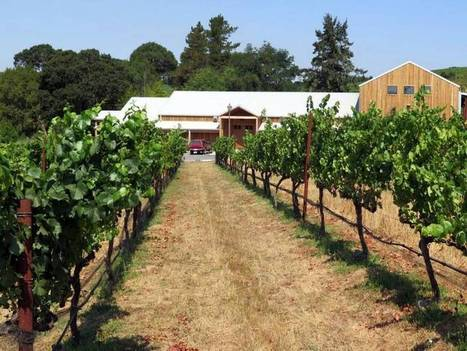 Mendocino County's Lazy Creek Vineyards readies for its close-up - Sacramento Bee | Mendocino County Living | Scoop.it