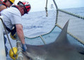New shark species discovered off SC coast | Local News | Rock Hill Herald Online | ScubaObsessed | Scoop.it