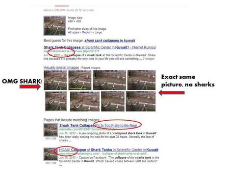 "How to tell if a ""shark in flooded city streets after a storm"" photo is a fake in 5 easy steps 