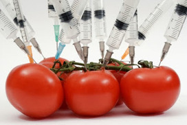 Cambio Sistémico Global: Seguridad alimentaria frente a transgénicos | Alimentos | Scoop.it