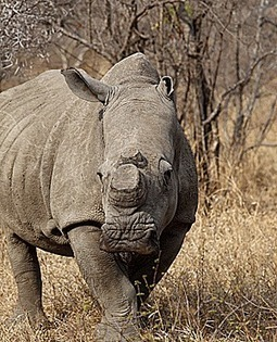 Youth can't shoot, so claims he only drove poachers | Poaching & Wildlife Crime | Scoop.it