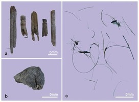 PLOS ONE: Buried in Sands: Environmental Analysis at the Archaeological Site of Xiaohe Cemetery, Xinjiang, China | Kaogu | Scoop.it