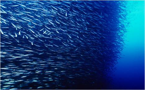 什麼樣的魚才能逃離魚網? | 孵個小故事 | Scoop.it