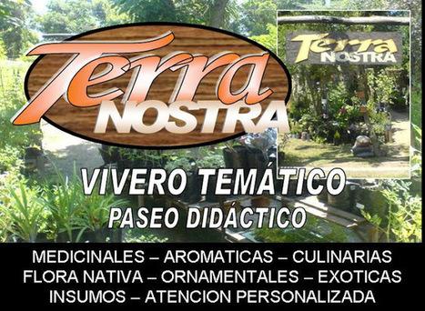 Terra Nostra: ROMPEPIEDRAS - Lepidium latifolium | Herbolaria | Scoop.it
