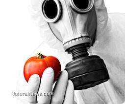 Monsanto and GMO lies revealed | URBAN GARDEN | Scoop.it