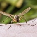This summer's mosquito epidemics are brought to you by climate change | Climate change challenges | Scoop.it