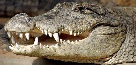 Over oude wijn en ons krokodillenbrein | Duurzaam Nieuw Organiseren | Dialoog | Scoop.it