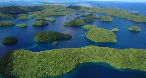 Palau Provides Reason For Ocean Optimism - The Daily Catch Ocean News | Palau | Scoop.it