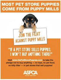 Bunny's Blog: ASPCA celebrates No Pet Store Puppies Day | Pet News | Scoop.it