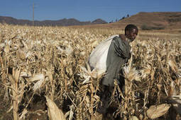 FAO -News Article:Agriculture and food security at heart of climate change action | Bio-diversity | Scoop.it