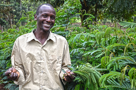 Agroforestry can ensure food security and mitigate the effects of ...   Sustainable Agriculture   Scoop.it