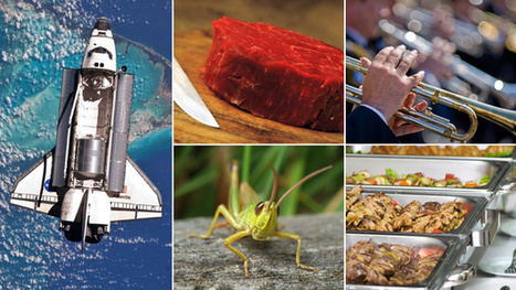 What will we be eating in 20 years' time? | Entomophagy: Edible Insects and the Future of Food | Scoop.it