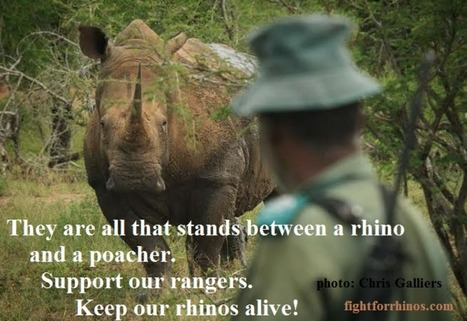 Making Rhinos Count in a World of Indifference | What's Happening to Africa's Rhino? | Scoop.it