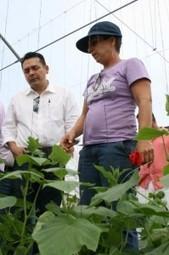 350 Empleos en producción mediante hidroponía en Motul, Yucatán | Cultivos Hidropónicos | Scoop.it