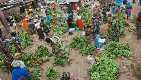 Ensuring food security: Key resources - SciDev.Net | CGIAR Climate in the News | Scoop.it