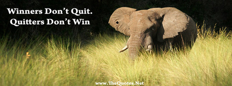 Facebook Cover Image - Beautiful Elephant - TheQuotes.Net | Facebook Cover Photos | Scoop.it