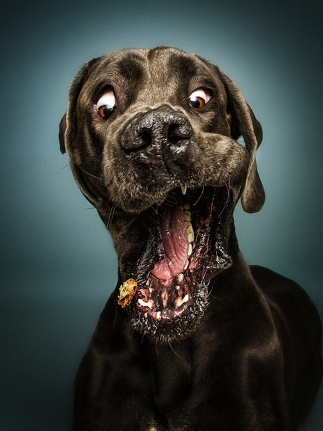 Christian Vieler Captures Hilarious Portraits of Dogs Catching Treats | PhotoHab | Scoop.it