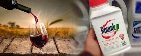 Du RoundUp détecté dans 100% des vins californiens | Toxique, soyons vigilant ! | Scoop.it