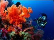 Top 10 Places to Scuba Dive | Top 10 items | Scoop.it
