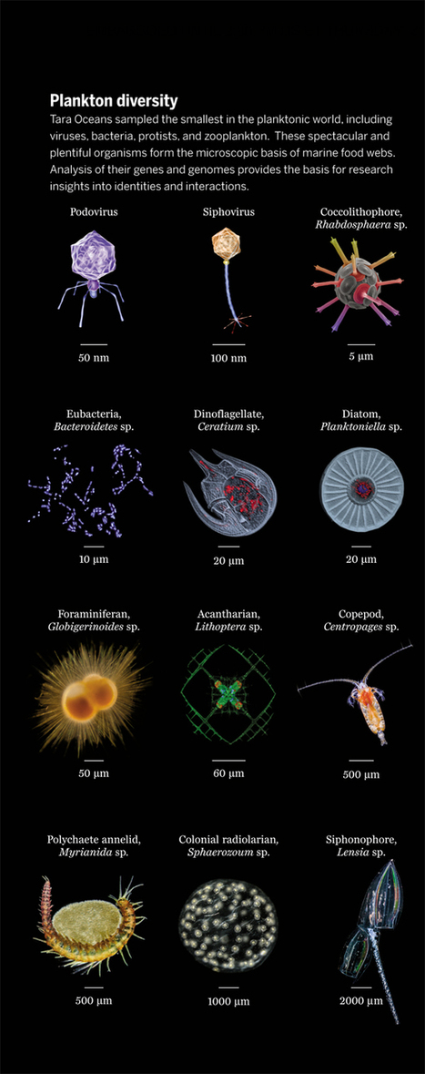 Multitude of Microscopic Wonders Discovered in the World's Oceans [Slide Show] | Science&Nature | Scoop.it