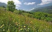 Chambres d'agriculture : Remise des prix nationaux de la troisième édition du concours national agricole Prairies fleuries | Paysage et espaces verts | Scoop.it