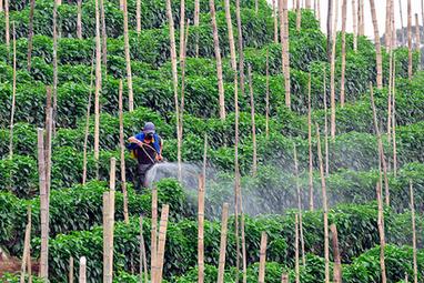 Comment les OGM favorisent la vente de pesticides | Culture | Scoop.it